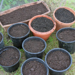 Veg seeds in pots in July