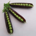 Purple Podded Peas