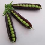 Saving Seeds – Peas and Beans