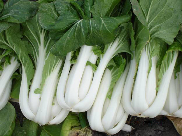 Image result for pak choi
