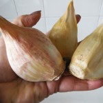 02 Elephant Garlic Cloves