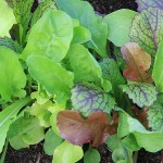 05 Mixed salad Leaves