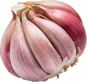 08 Garlic Bulb