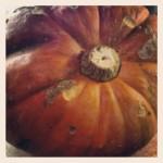Our 14kg pumpkin!