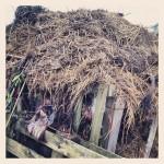 Communal compost heap.