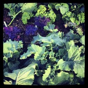 Lots of kale!