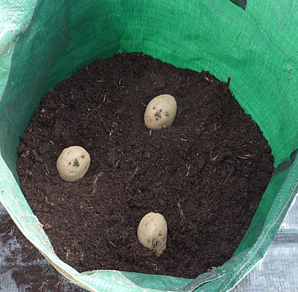 Best Way To Plant Potatoes