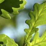 OPAL Tree Health Survey