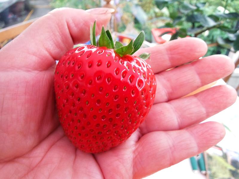 Big Fruit 2