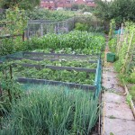 How I grew over half a tonne of Veg on my allotment in 2013.. (Super-Blog part 2)
