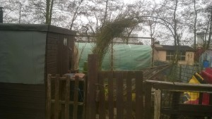 My old allotment entrance along with the wind damaged arch.
